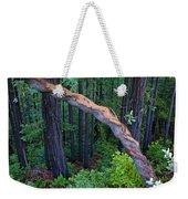 Redwood Forest Weekender Tote Bag