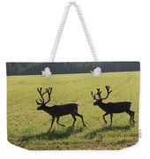 Reindeers On Swedish Fjeld Weekender Tote Bag