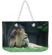 Relaxing Lion With A Thick Black Fur Mane Weekender Tote Bag