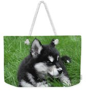 Resting Alusky Puppy Laying In Green Grass Weekender Tote Bag