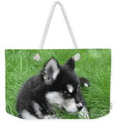 Resting Two Month Old Alusky Puppy Dog In Grass Weekender Tote Bag