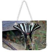 Resting Zebra Swallowtail Butterfly Weekender Tote Bag