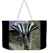 Resting Zebra Swallowtail Butterfly Square Weekender Tote Bag