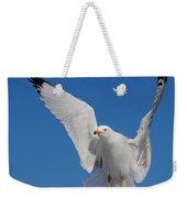 Ring Billed Gull In Flight Weekender Tote Bag by Mircea Costina Photography