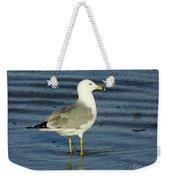 Ringed Billed Sea Gull Weekender Tote Bag