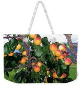 Ripe Apricots Weekender Tote Bag by Will Borden