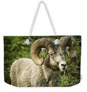 Rocky Mountain Bighorn Sheep Weekender Tote Bag