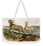 Rocky Mountain Sheep, 1846 Weekender Tote Bag