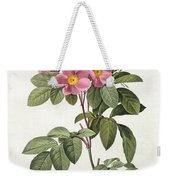 Rosa Carolina Corymbosa Weekender Tote Bag by Pierre Joseph Redoute