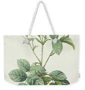 Rosa Centifolia Caryophyllea Weekender Tote Bag