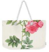 Rosa Pimpinellifolia Flore Variegato  Weekender Tote Bag by Pierre Joseph Redoute
