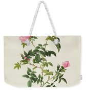 Rosa Sepium Flore Submultiplici Weekender Tote Bag by Pierre Joseph Redoute