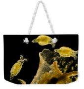 Rotifers Philodina Sp., Lm Weekender Tote Bag