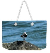 Ruddy Turnstone 2 Weekender Tote Bag