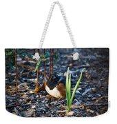 Rufous Sided Towhee Looking Intent Weekender Tote Bag