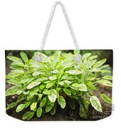Sage Plant Weekender Tote Bag by Elena Elisseeva