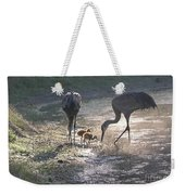 Sandhill Crane Family In Morning Sunshine Weekender Tote Bag by Carol Groenen