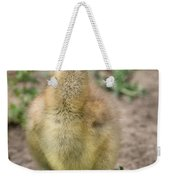 Screamer Chicking Eating His Spinach Weekender Tote Bag