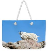 Scruffy Mountain Goat On The Mount Massive Summit Weekender Tote Bag