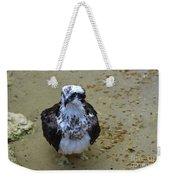 Sea Hawk Standing In Shallow Water Weekender Tote Bag