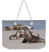 Sea Lions Weekender Tote Bag