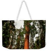 Sequoia In Kings Canyon Weekender Tote Bag