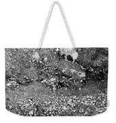 Sheep In Bw Weekender Tote Bag