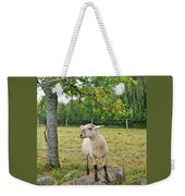 Happy Sheep Posing For Her Photo Weekender Tote Bag