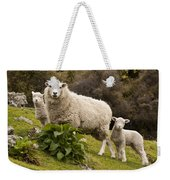 Sheep With Twin Lambs Stony Bay Weekender Tote Bag by Colin Monteath