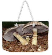 Sheltering The Young Weekender Tote Bag