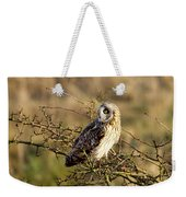 Short-eared Owl In Tree Weekender Tote Bag