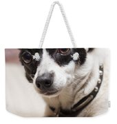 Shy Lonely Mini Fox Terrier Dog Laying On A Bed Weekender Tote Bag