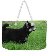 Side View Of A Two Month Old Alusky Pup Weekender Tote Bag