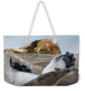 Siesta Time For Lions In Africa Weekender Tote Bag