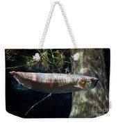 Silver Arowana Fish In Zoo Weekender Tote Bag