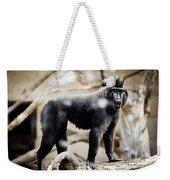Single Macaque Monkey Standing Weekender Tote Bag