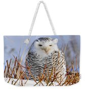 Sitting Snowy Owl Weekender Tote Bag