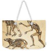 Skeletons Of Man, Ape, Bear, 1860 Weekender Tote Bag