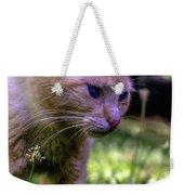 Skippy Feral Cat Portrait 0369b Weekender Tote Bag