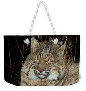 Sleepy Bobcat Weekender Tote Bag