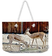 Slender-horned Gazelles In Living Desert Zoo And Gardens In Palm Desert-california Weekender Tote Bag