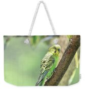 Small Budgie Birds With Beautiful Colored Feathers Weekender Tote Bag