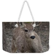 Small Fawn In Tombstone Weekender Tote Bag