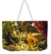 Small Fish In An Aquarium Weekender Tote Bag