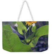 Small Yellow Flower And Green Big Leaves In The Sun Light. Weekender Tote Bag