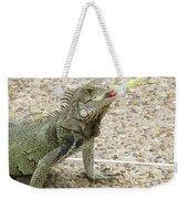 Snacking Iguana On A Concrete Walk Way Weekender Tote Bag