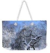 Snow-covered Sunlit Apple Trees Weekender Tote Bag