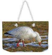 Snow Goose Feeding In A Field Weekender Tote Bag