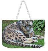 Snow Leopard, Doue-la-fontaine Zoo, Loire, France Weekender Tote Bag