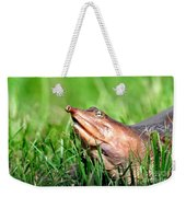 Soft Shell Turtle  Weekender Tote Bag